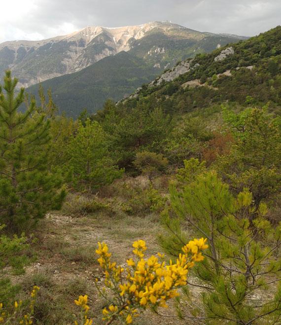mont Ventoux @ Abry